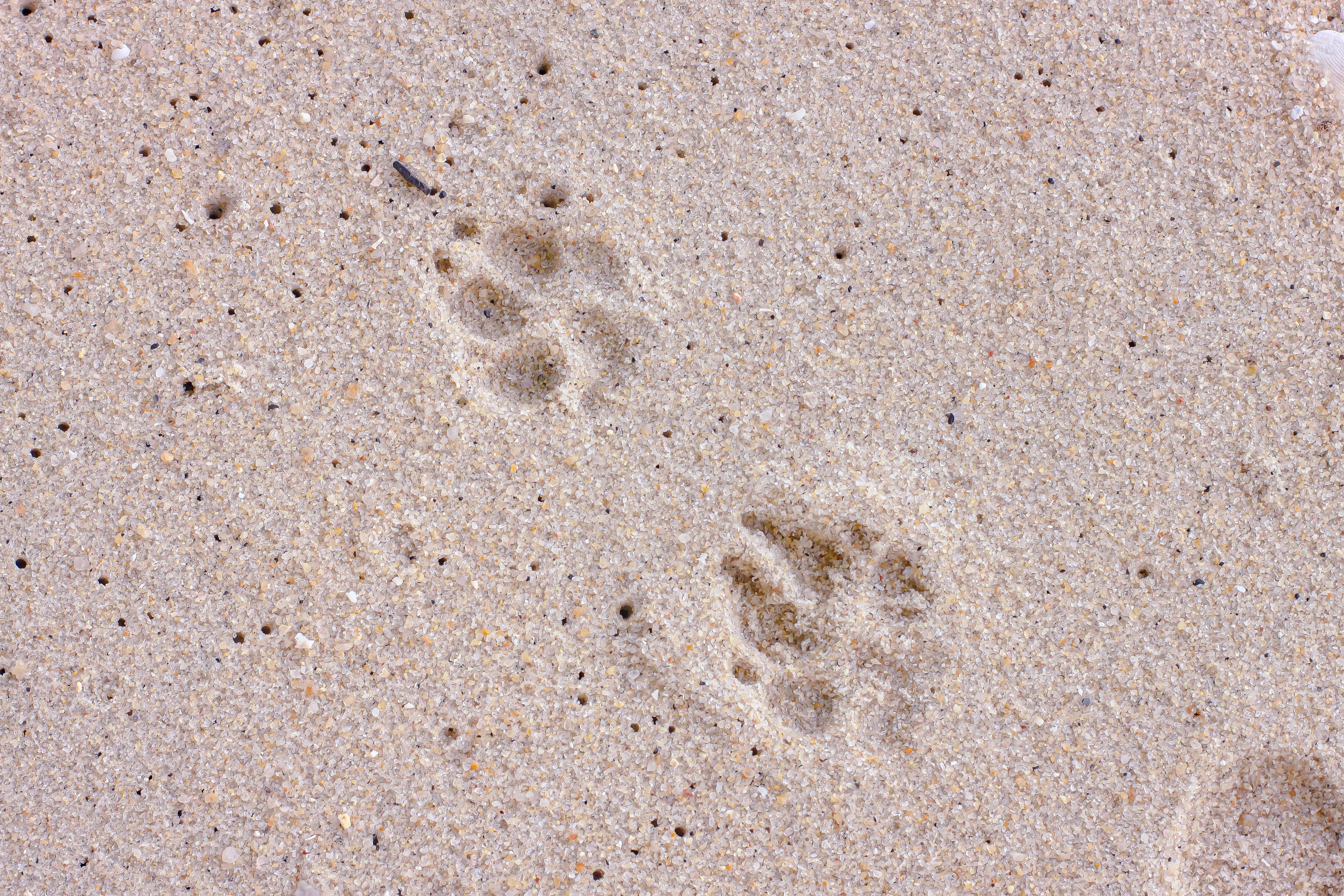 17 Dog Or Cat Paw Print Memorial Gift Or Keepsake Ideas Cake Blog
